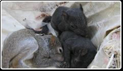 ani_squirrel